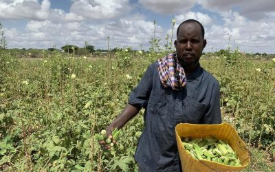 Beneficiaries of monitored livelihoods programmes see gains in employment, income and savings