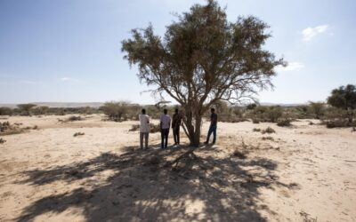 UNHCR warns of critical protection gaps for people on the move in the Sahel and East Africa