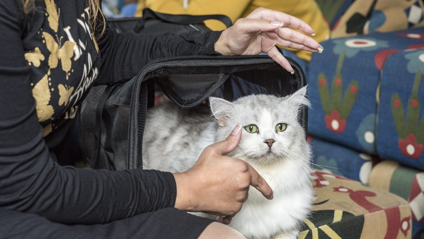 Switzerland. Pet cat brings companionship on long journey to safety