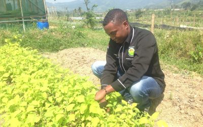 Refugee youth join Indonesians in planting seeds for a better future through organic farming