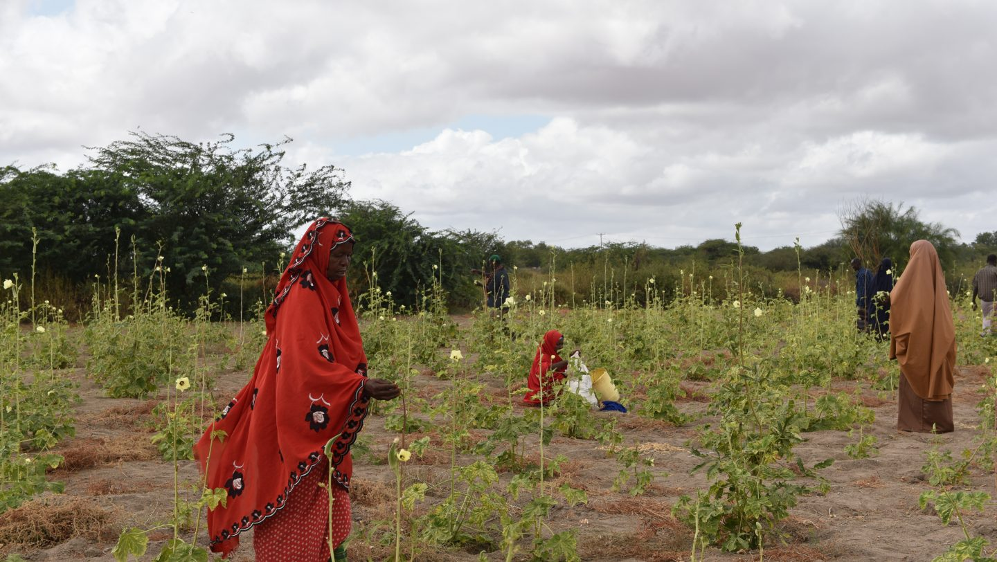 Farming in Dadaab