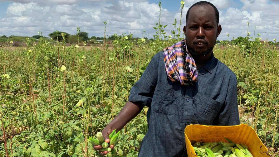 Agricultural farming, a reliable source of livelihood for both refugees and host community in Dadaab