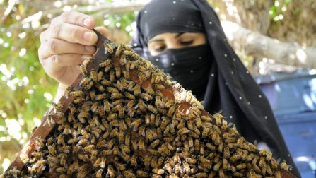 Afghanistan / Skills like bee-keeping empower vulnerable Afghan returnee women who would otherwise not be able to make a living. / UNHCR / R. Arnold / September 2008