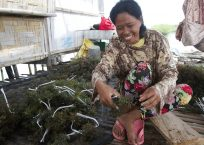Mindanao's returnees get help with kelp in the Philippines