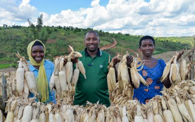 Rwanda: Refugees and Host Communities join forces in the Misizi Marshland to improve their livelihoods