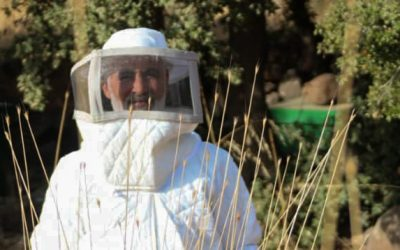 From displacement to success – this beekeeper is keeping his dream alive