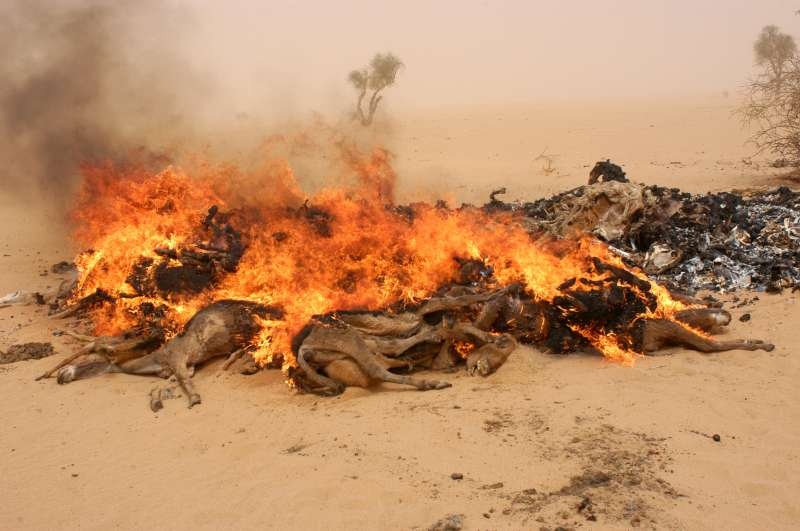 Humanitarian agencies burn carcasses of donkeys, cows and goats that have died from exhaustion, dehydration and starvation, to prevent the decaying bodies from contaminating water supplies and increasing the risk of disease among the refugees.