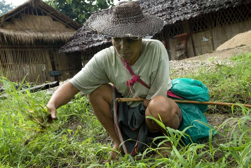 Ka Du Lar pulls weeds from a field near Mae La Refugee Camp where he grows vegetables.
