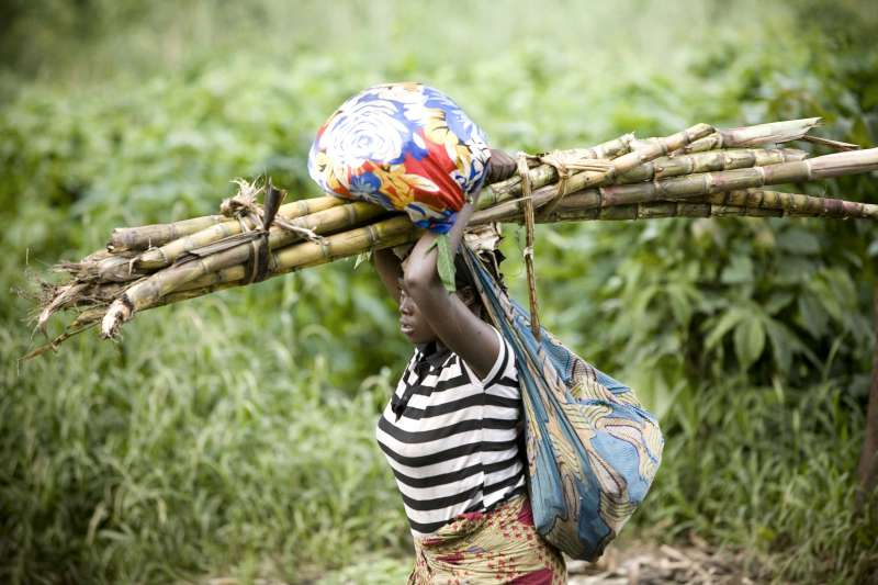 A woman carries her belongings and some sugar cane as she flees […]
