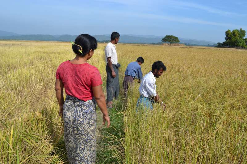 Farming together to overcome fear and mistrust in Rakhine state, Myanmar