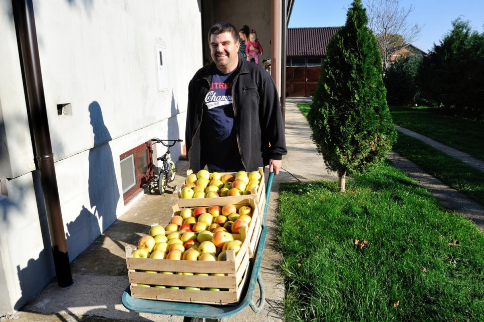Miodrag Hillic took 1.5 tons of apples from his orchard and gave them to refugees and migrants arriving in Croatia.