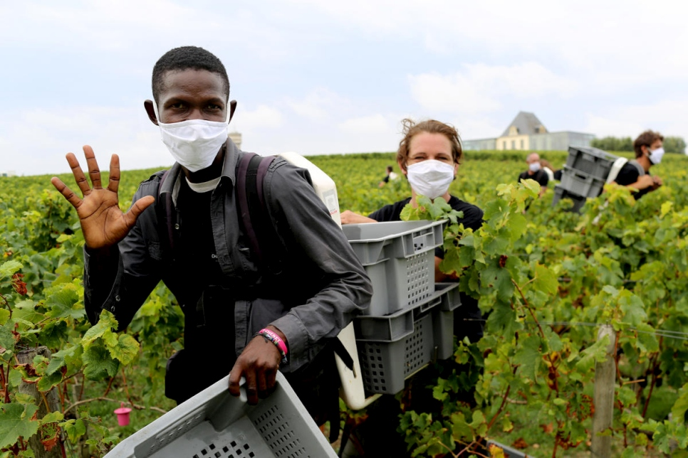 Hamed, from Sudan, is one of a team of refugees working in the vineyards at Château de Pedesclaux in the Pauillac area of Bordeaux.