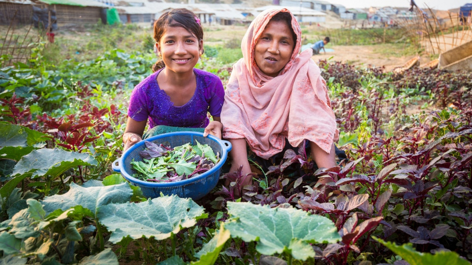 Twelve-year-old Rizwana Begum and her mother Laila pick lettuce shoots from their vegetable garden in Kutupalong refugee settlement.