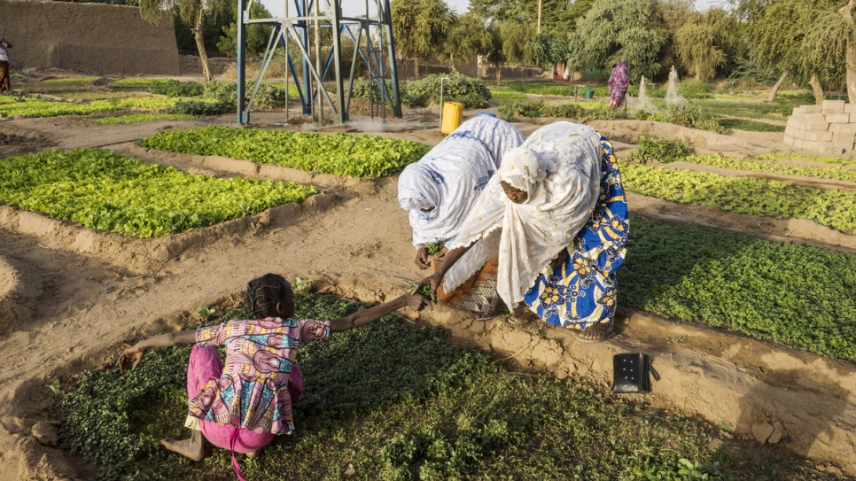 Women work in a vegetable garden on the banks of the Niger.