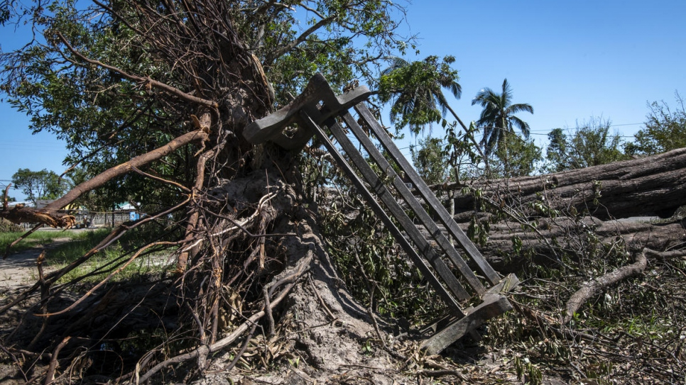 A tree ripped from its roots by Cyclone Idai with a park bench left on its side in Beira, Mozambique.