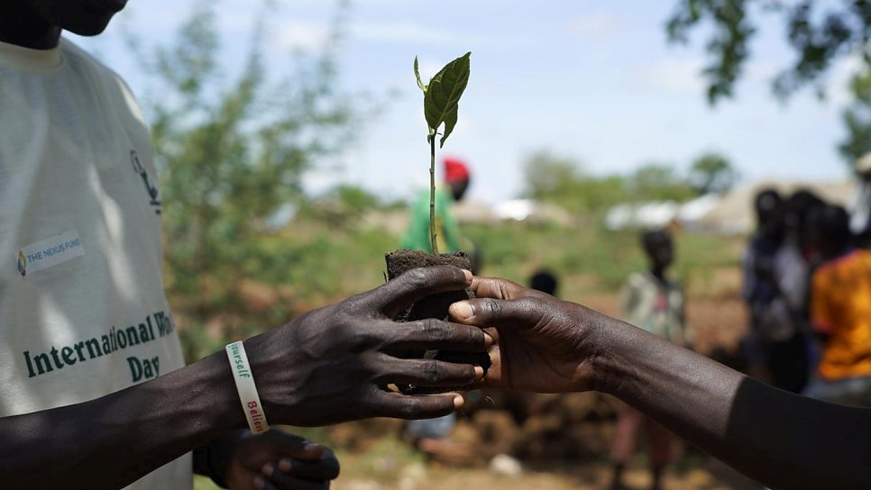 Refugee from South Sudan becomes an advocate for tree planting in Uganda