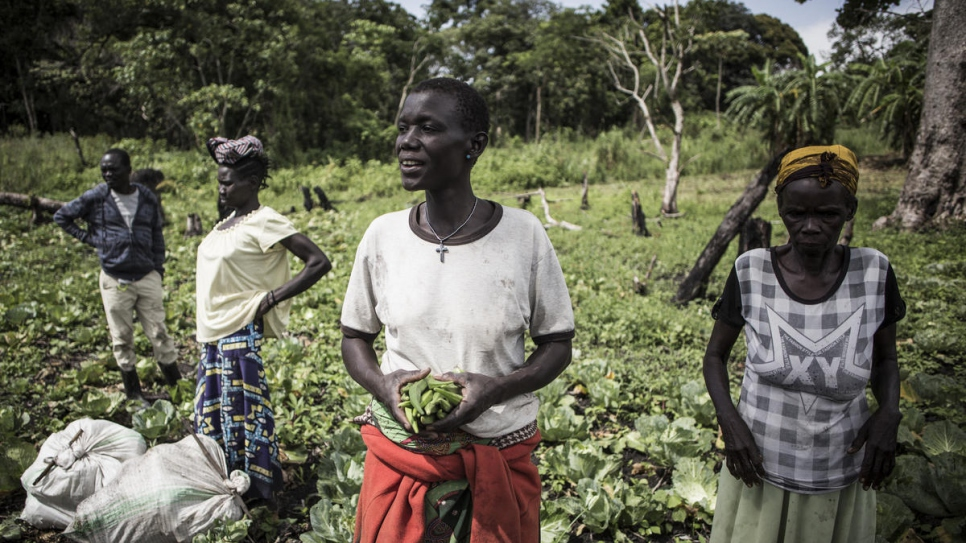 Neema (centre) harvests okra on the patch of land she works with other members of a farming cooperative made up of host and refugee farmers.