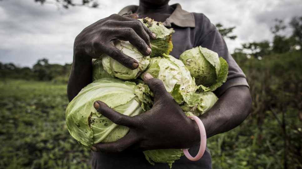 A South Sudanese farmer holds cabbages during a harvest morning at Biringi settlement.
