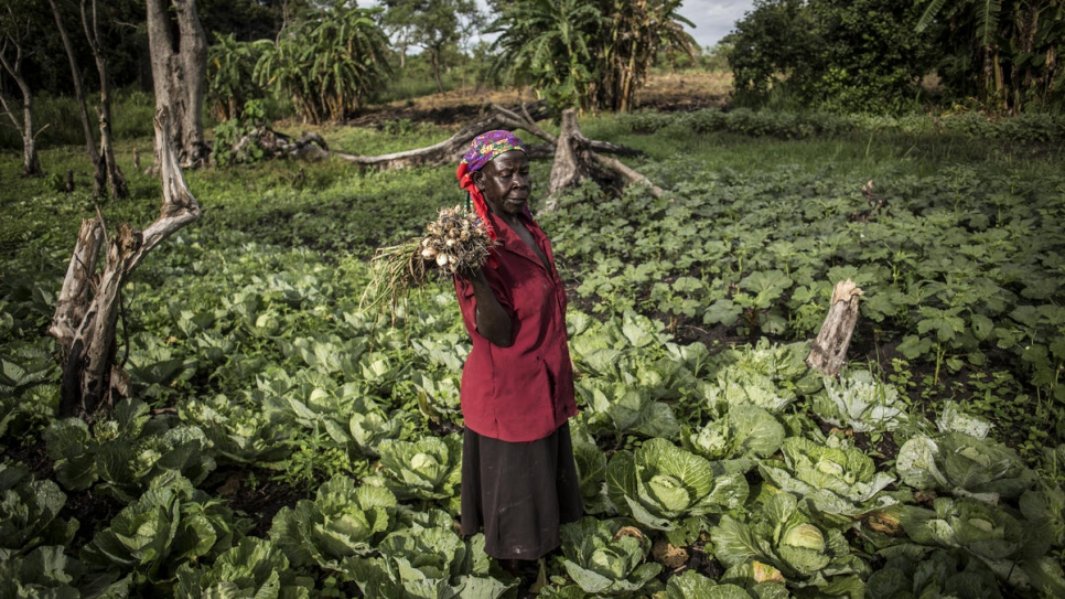 A South Sudanese woman holds a bundle of spring onions in a field of cabbages during a harvest morning at Biringi settlement.
