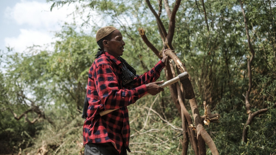 An Ethiopian member of the Dollo Ado Cooperative cuts down prosopis trees near the border with Somalia. They sell it to the Bur Amino Cooperative, which processes it into briquettes and construction material.