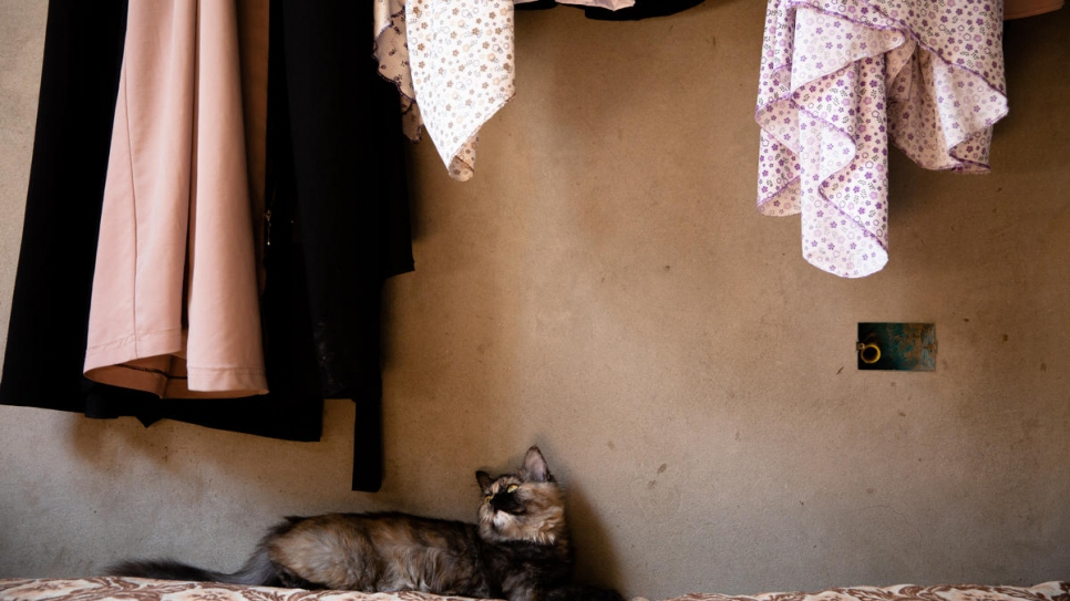 One of the family's cats reclines on a bed in the apartment, which they help to keep free of rodents.