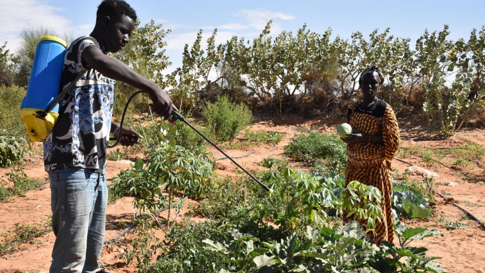 Malian refugees spraying a vegetable garden at Mbera camp with homemade bio-pesticides.